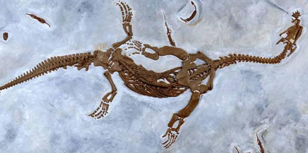 Come lavora un paleontologo