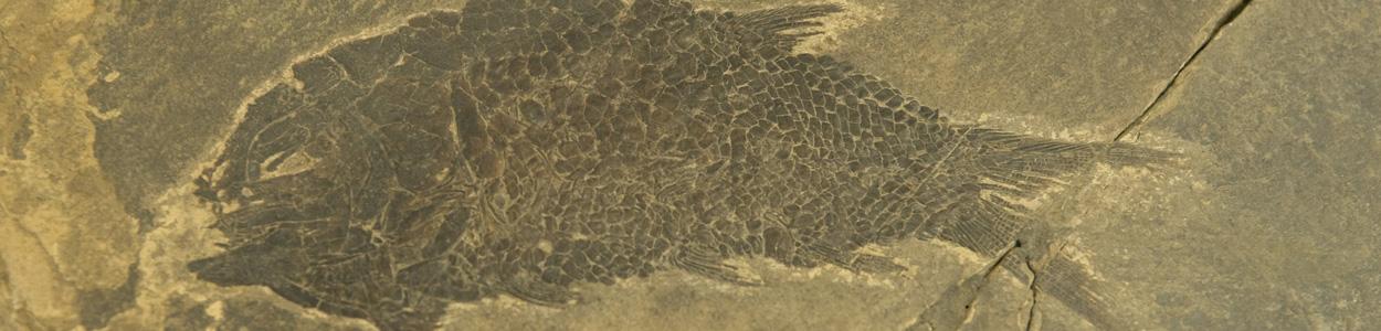Fossile - Varese4U - Siti Unesco provincia di Varese